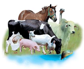ZOOTECNICA-ALLEVAMENTO DELL'ANIMALE-AGRICOLTURA